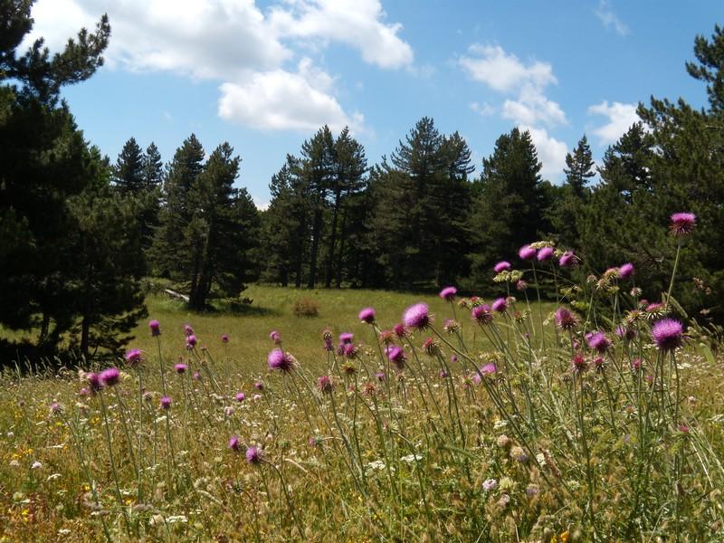 Meraviglie d'Italia sul Sentiero: le diverse sfumature della natura nel Parco nazionale della Sila