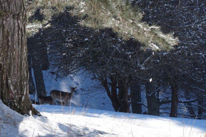 il Parco nazionale della Sila è il luogo delle diverse sfumature della natura