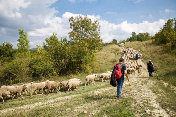 Sentiero Italia CAI, la transumanza