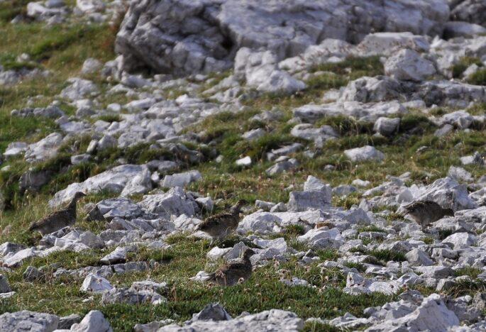 Sentiero Italia CAI, Pernice bianca, era glaciale