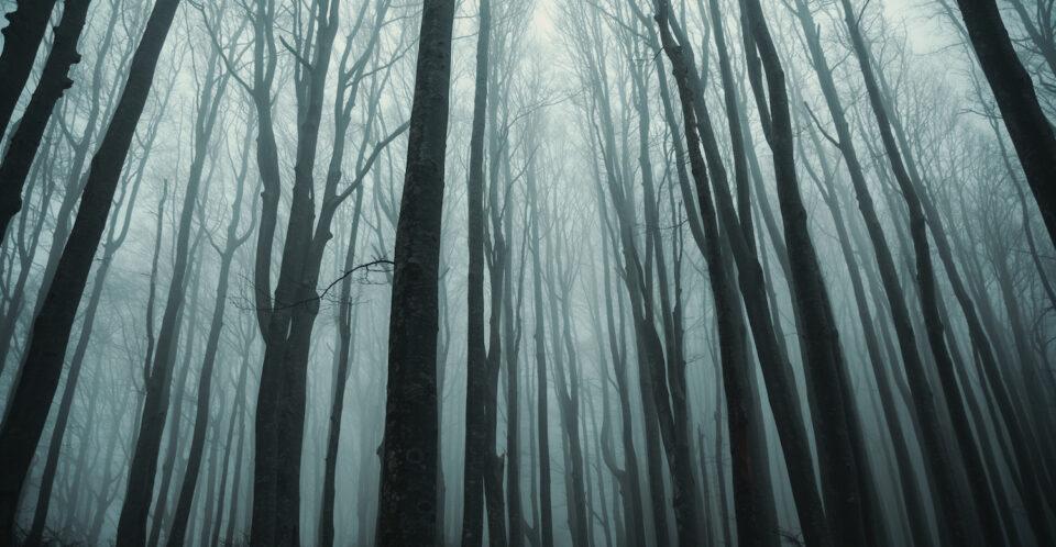 """Foreste Casentinesi: online la seconda video pillola di """"Linea 7000"""""""
