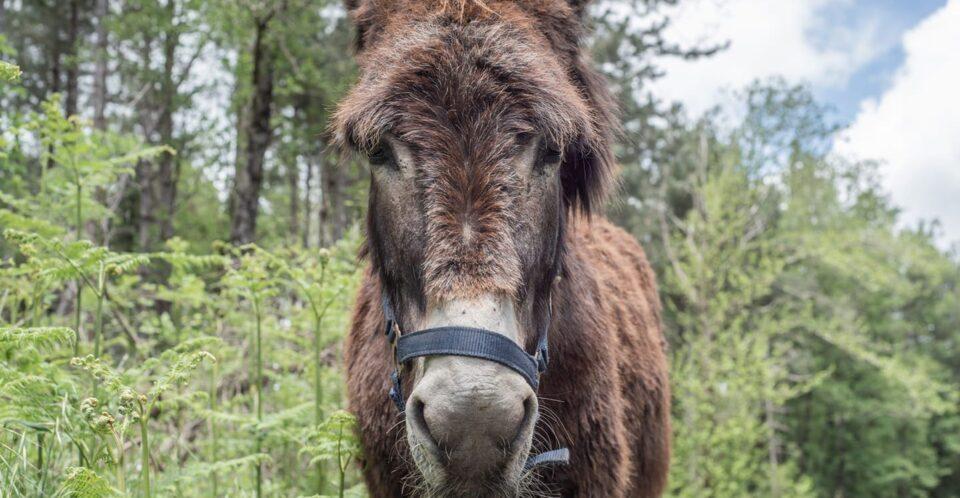 """Woodvivors: dai Carbonai alla """"fuga"""" delle mule, il primo mese e mezzo di viaggio"""