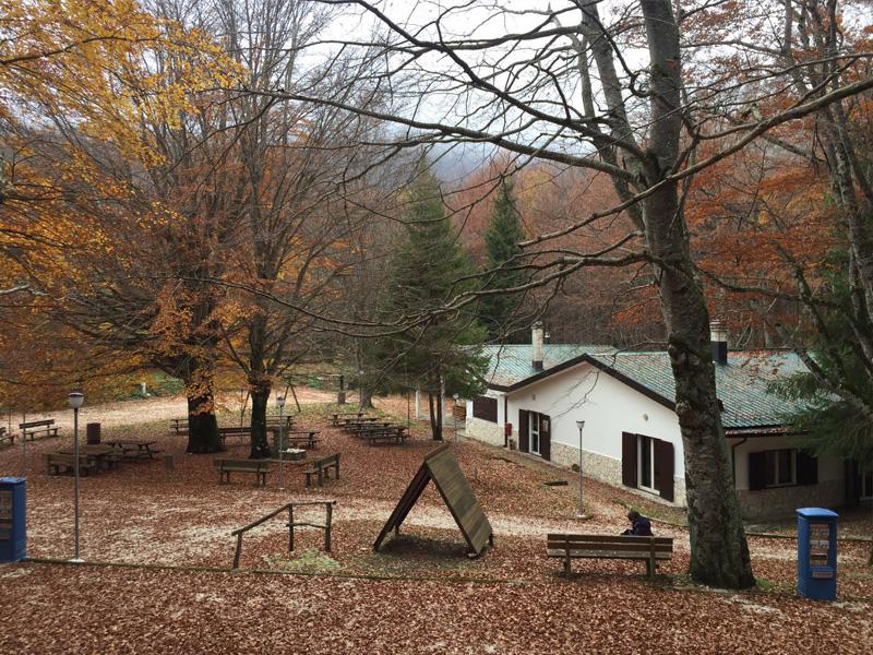 Camping Il Ceppo: un'esperienza nel cuore del bosco Martese